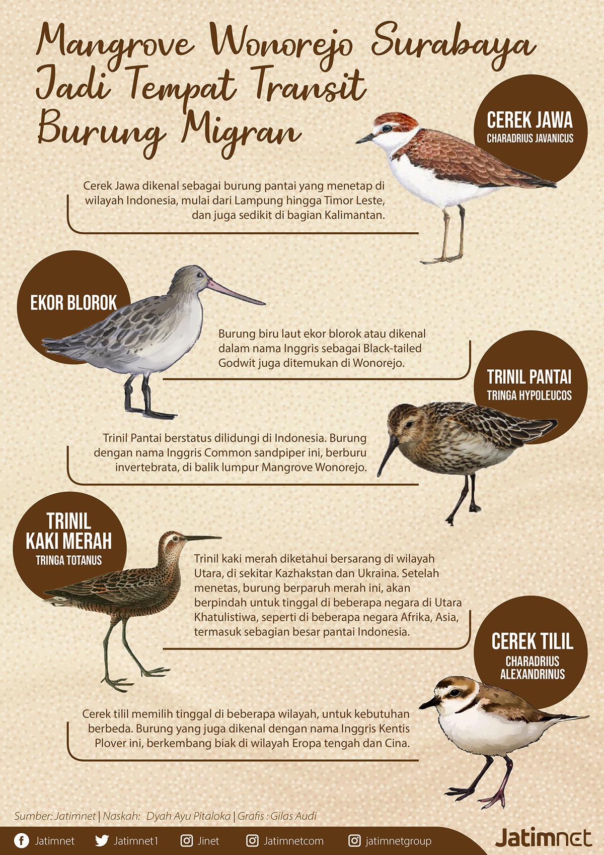 Burung Migran yang Singgah di Mangrove Wonorejo