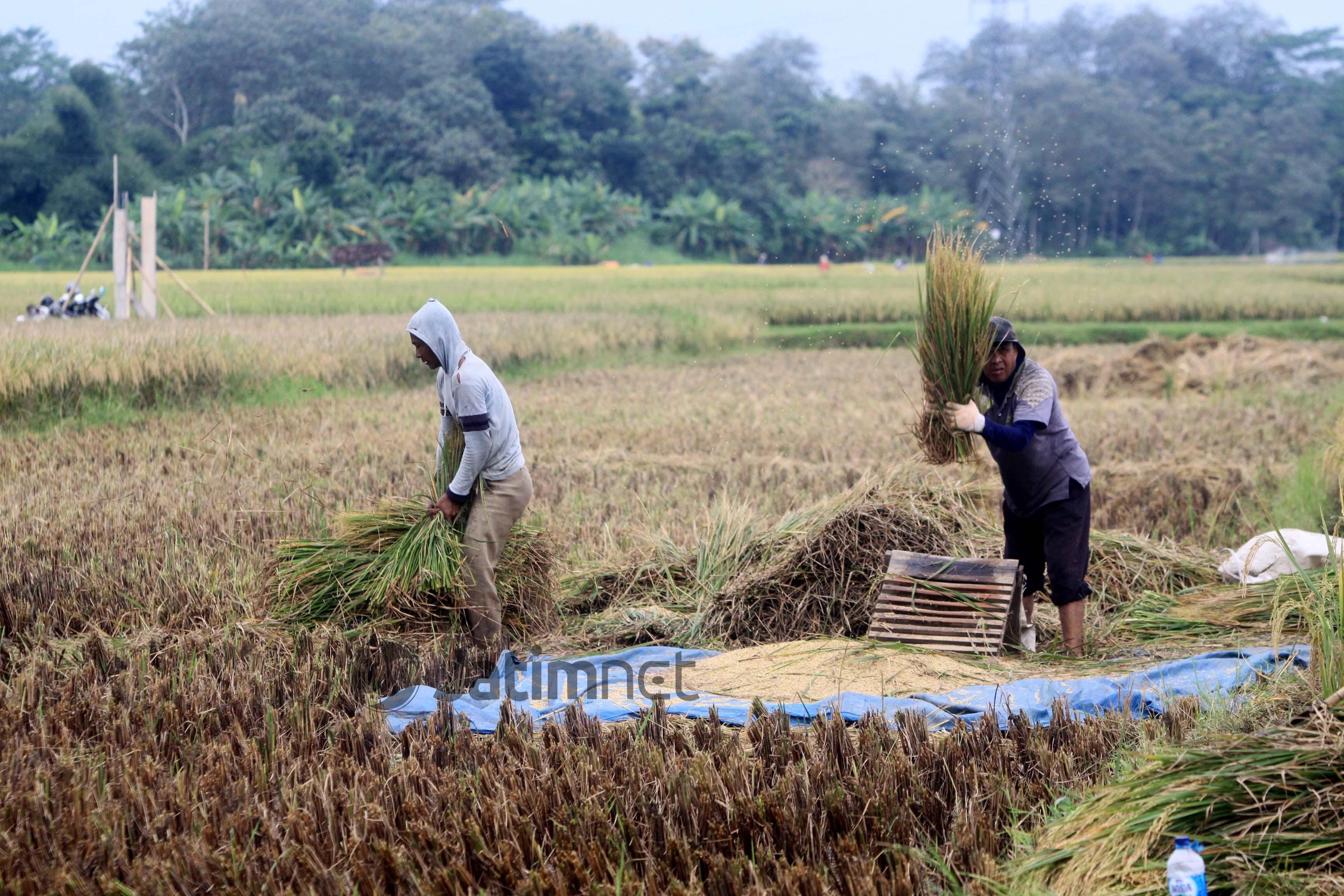 305 Hektare Lahan di Ponorogo Puso, PetaniTerimaBantuan