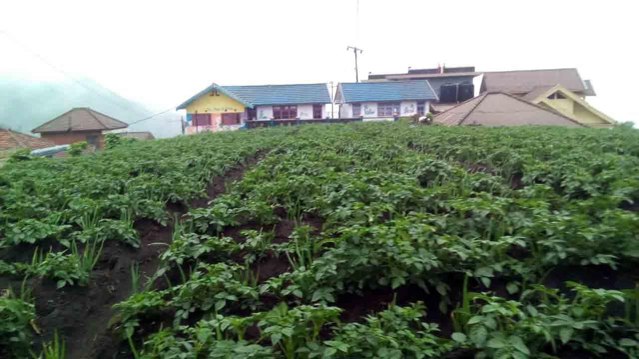 Aktivitas Bromo Tak Pengaruhi Pertanian Warga