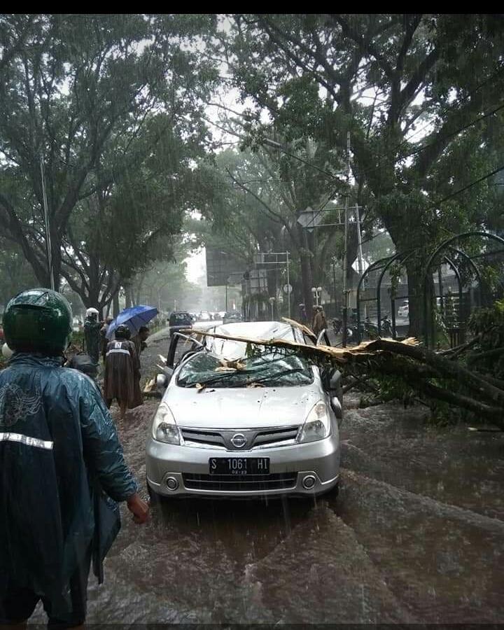 Angin Robohkan 23 Pohon dan 9 Rumah di Malang