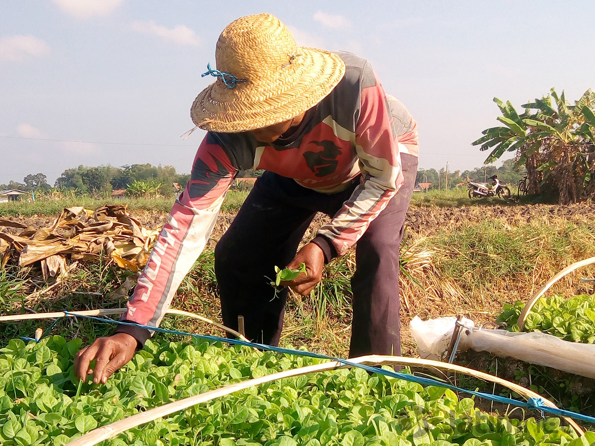 Kalteng Cari Transmigran Ke Tiga Provinsi di Pulau Jawa
