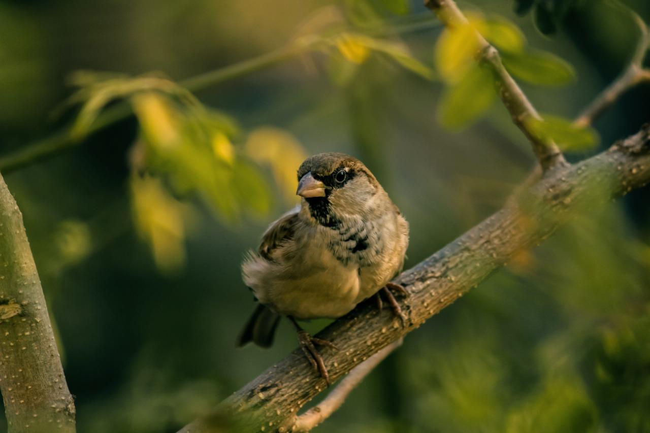 Kota di Amerika Serikat Bunuh 1 Miliar Burung Pertahun