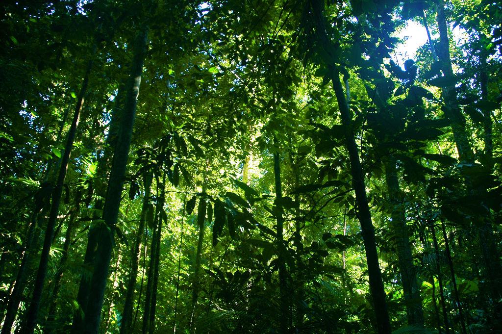 Pohon Tropis Tertinggi di Dunia Ini Bernama Menara