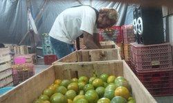 pedagang-sayangkan-jeruk-banyuwangi-yang-lebih-kecut