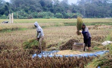 305-hektare-lahan-di-ponorogo-puso-petani-terima-bantuan