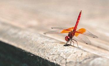 proyek-mesin-pencari-google-untuk-cina-dragonfly-dihentikan