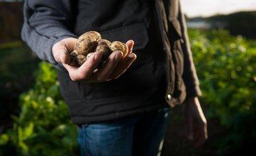 jus-kentang-obati-gastritis-ulkus-duodenum-dan-gagal-pernapasan