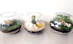 terrarium-miniatur-ekosistem-sebagai-media-pembelajaran