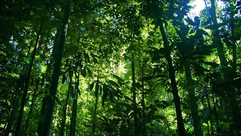 pohon-tropis-tertinggi-di-dunia-ini-bernama-menara