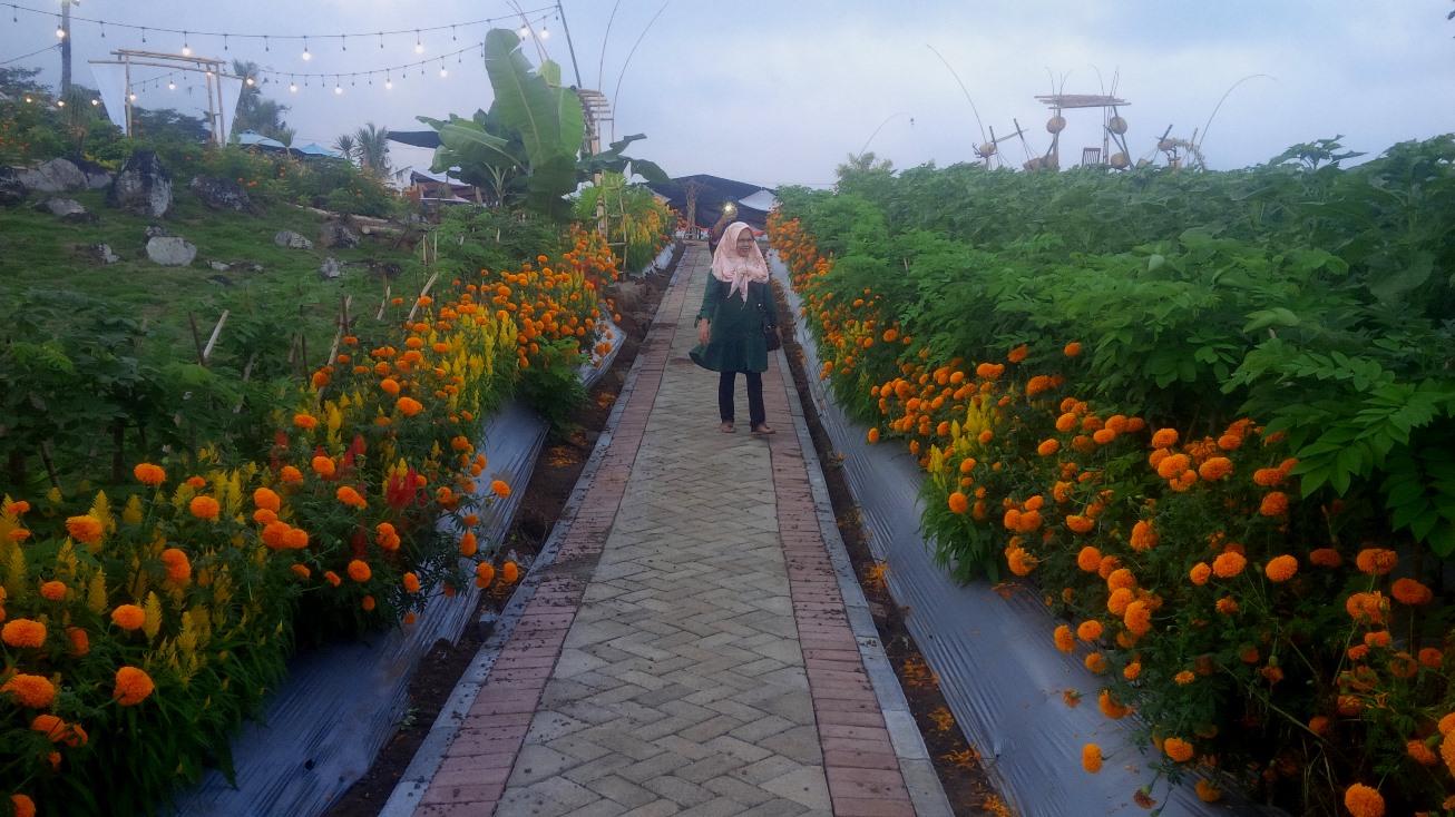 Hamparan Bunga Sambut Banyuwangi Agro Expo 2019