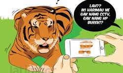 lacak-harimau-pemangsa-kamera-trap-macet