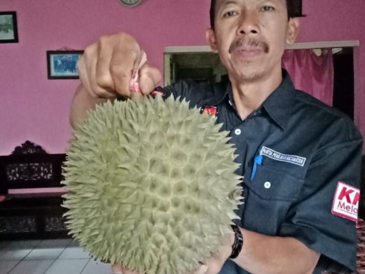 """""""Raja Tupai"""" Kaki Argopuro, Durian Khas Krucil Probolinggo"""
