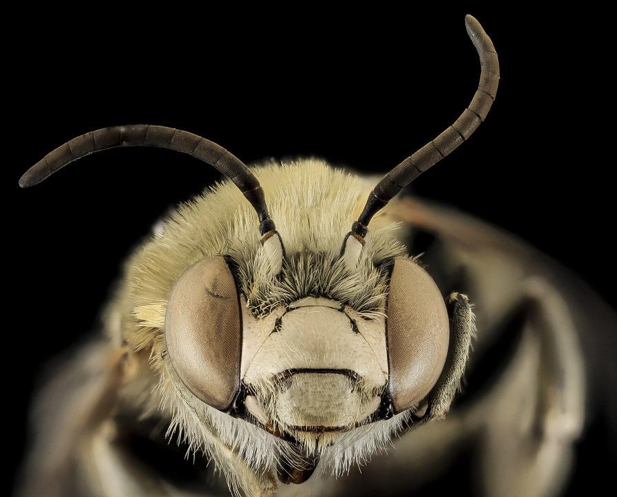 Wanita Taiwan Ini Hidup dengan Empat Lebah di Matanya