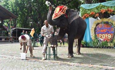 p-kbs-edukasi-pengetahuan-dan-cara-merawat-gajah-p