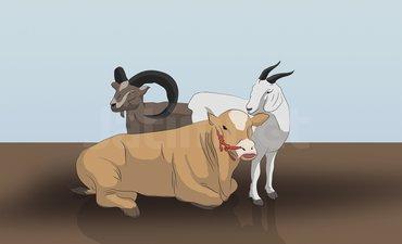 kambing-dan-domba-perebutkan-piala-presiden-di-kota-batu