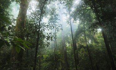 potensi-hhbk-dan-jasling-kawasan-hutan-capai-95-persen
