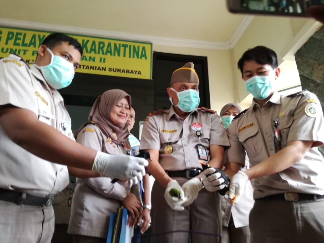 Ratusan Burung dari Balikpapan Ditahan BBKP Surabaya
