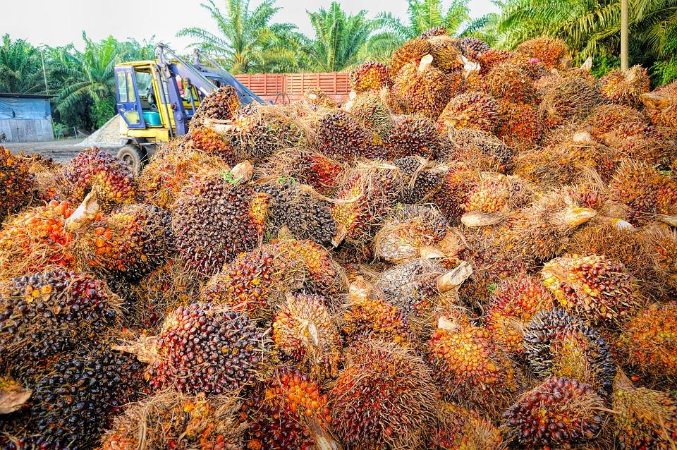 Indonesia Bikin Bensin dan LPG dari Sawit dengan <em>Co-Processing</em>