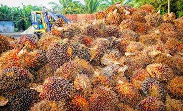 indonesia-bikin-bensin-dan-lpg-dari-sawit-dengan-co-processing