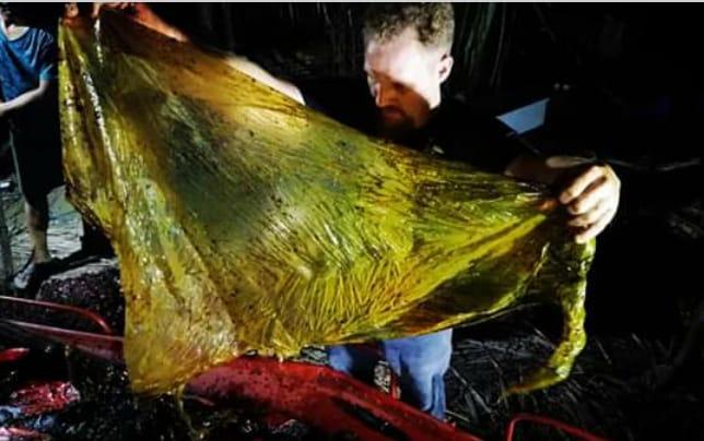 Paus Mati Keracunan 40 Kilogram Plastik di Filipina