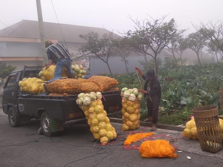 Aktivitas Gunung Bromo Rusak Ribuan Hektar Lahan Pertanian