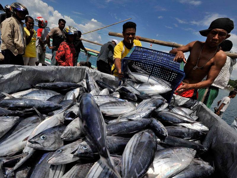 Kulon Progo Targetkan Produksi Ikan Tangkap 2.673 Ton