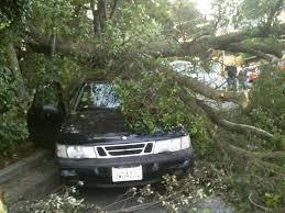 Pohon Tumbang di Kediri Tewaskan Penumpang Mobil